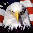 American Patriot Eagle