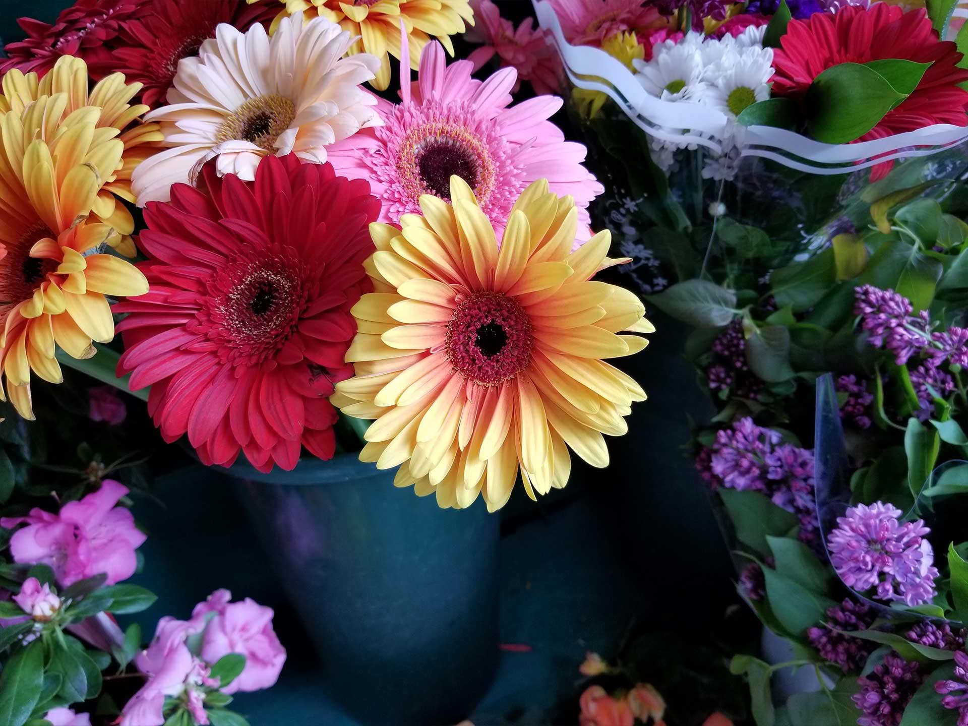 S8_flower